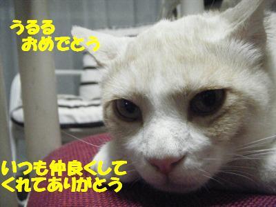2010_061906381.jpg