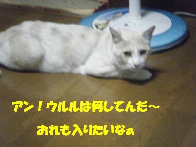 2010_06270027.jpg