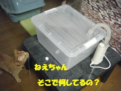 2010_06270044.jpg