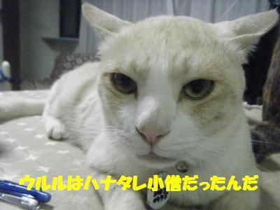 2010_06270058.jpg