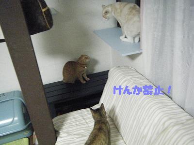 2010_070700061.jpg