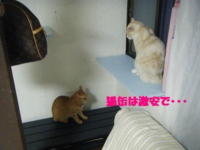 2010_070700081.jpg