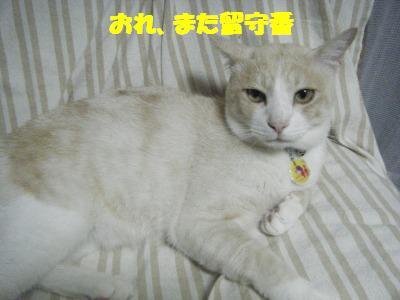 2010_07100010.jpg