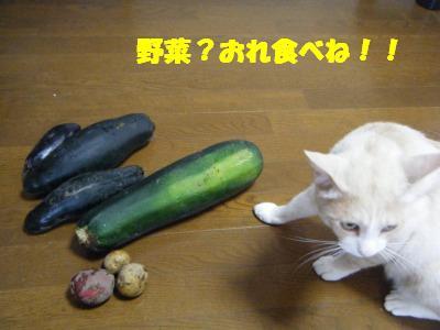 2010_07110121.jpg
