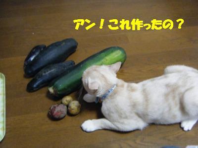 2010_07110123.jpg