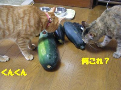 2010_07110130.jpg