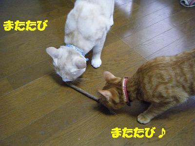 2010_071101481.jpg