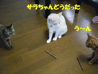 2010_071101491.jpg