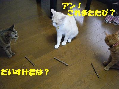 2010_071101501.jpg