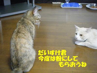 2010_071101621.jpg