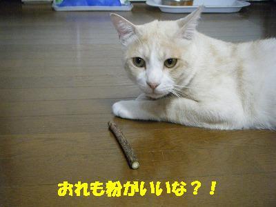 2010_071101651.jpg