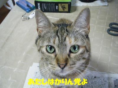 2010_071102301.jpg