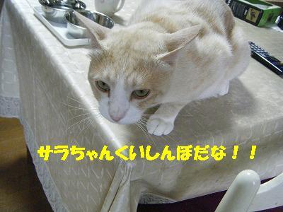 2010_071102491.jpg
