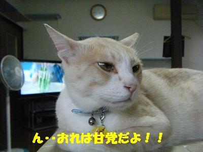 2010_071102541.jpg