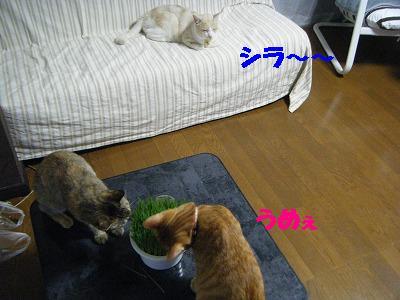 2010_071800111.jpg