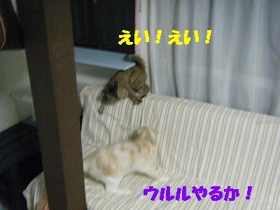 2010_071800631.jpg