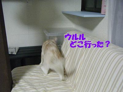 2010_071800661.jpg