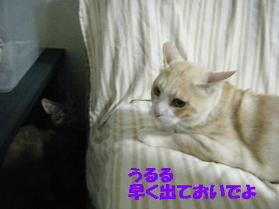 2010_071800711.jpg