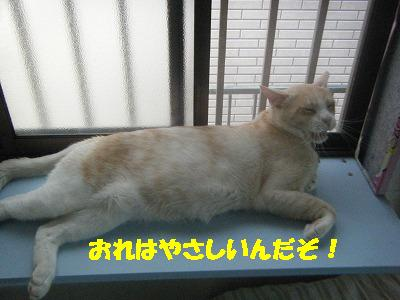 2010_071801171.jpg