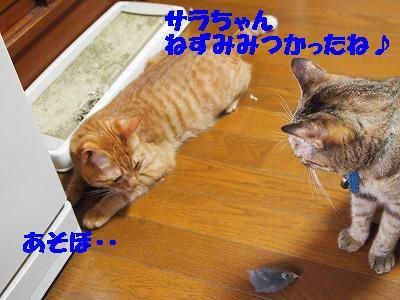 2010_072103561.jpg