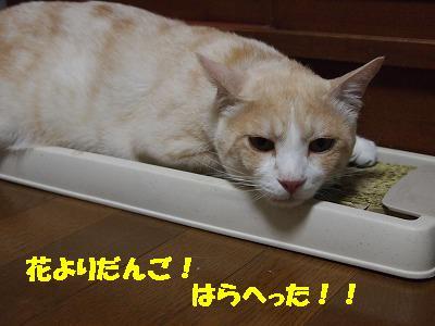 2010_072104061.jpg