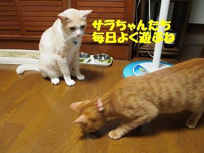 2010_072104131.jpg