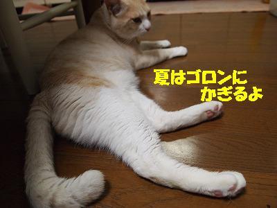 2010_072104171.jpg