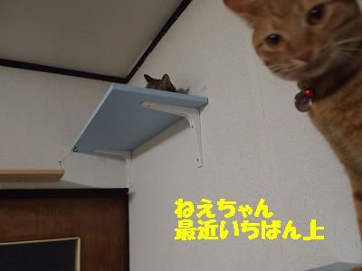 2010_0725003811.jpg
