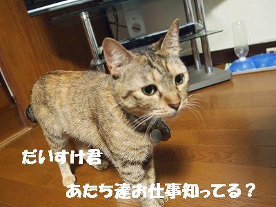 2010_072504111.jpg