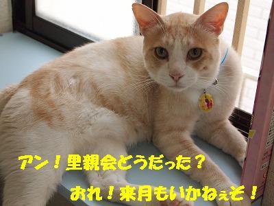 2010_072504771.jpg