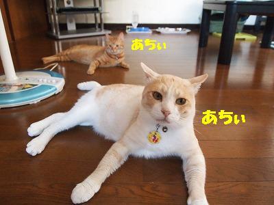2010_072504811.jpg