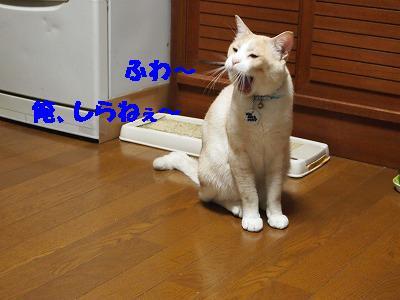 2010_080100051.jpg