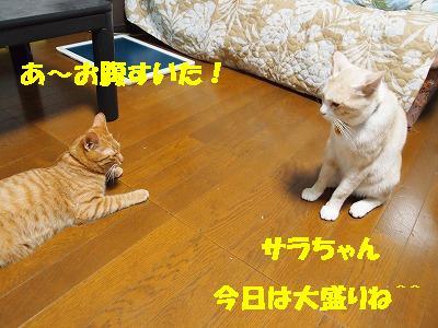 2010_080102141.jpg