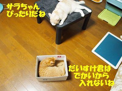 2010_080103281.jpg