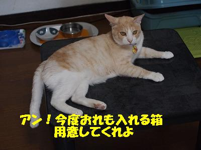 2010_080400031.jpg