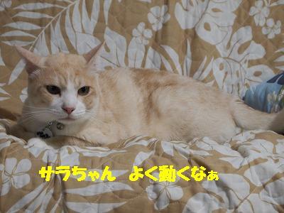2010_080404991.jpg