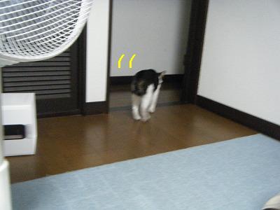 2010_081100481.jpg
