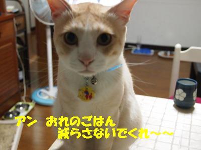 2010_081500031.jpg