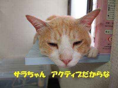 2010_081504191.jpg