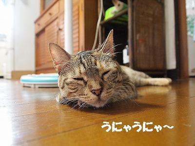 2010_081504601.jpg