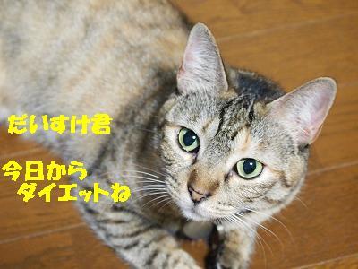 2010_081504651.jpg