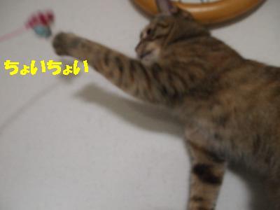 2010_081800621.jpg