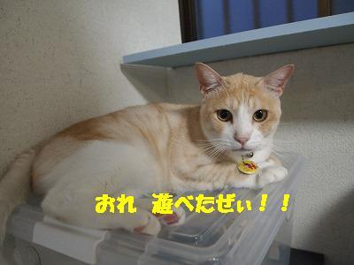 2010_081801471.jpg