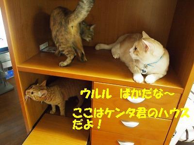 2010_082200131.jpg