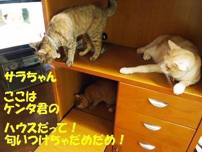 2010_082200151.jpg