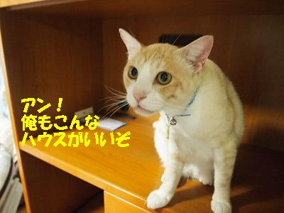2010_0822004611.jpg