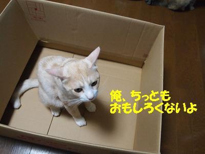 2010_082201161.jpg