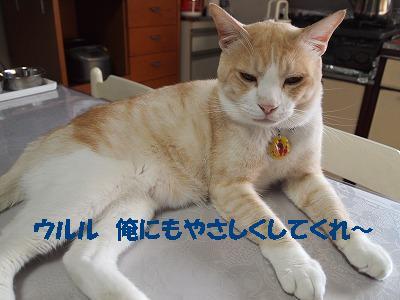 2010_082500131.jpg