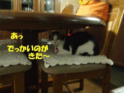 2010_082501891.jpg