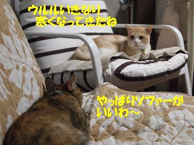 2010_090800871.jpg